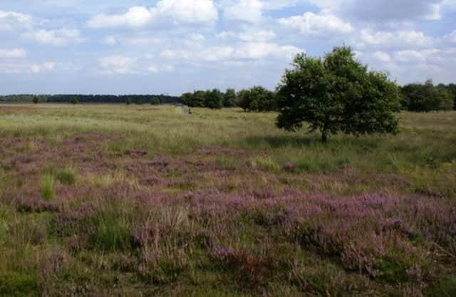 Heide van Kampina