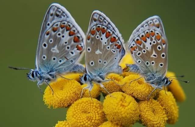 Vlinderbelevingspad