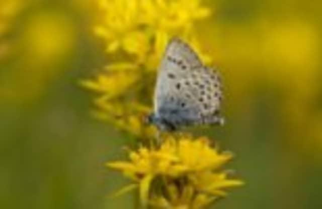 Vlinders en grote grazers