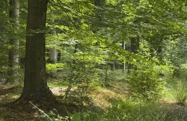 Natuurlijk bos