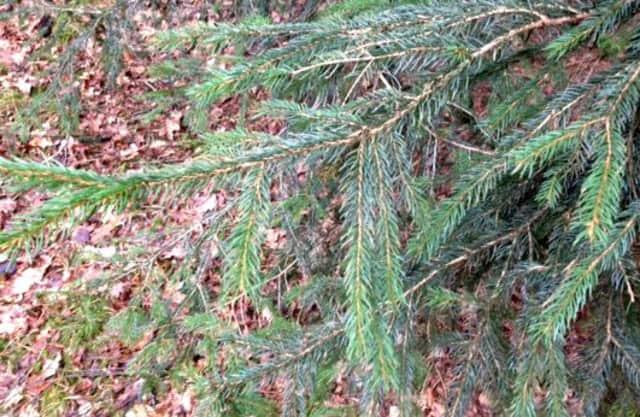 Gevarieerd bos