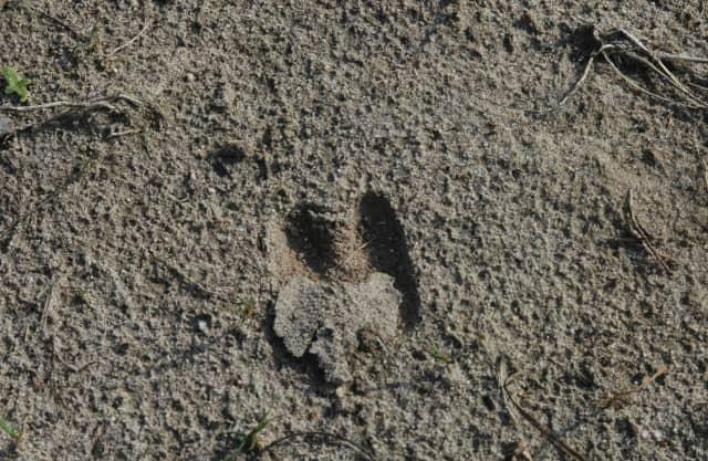 Dierensporen in het zand