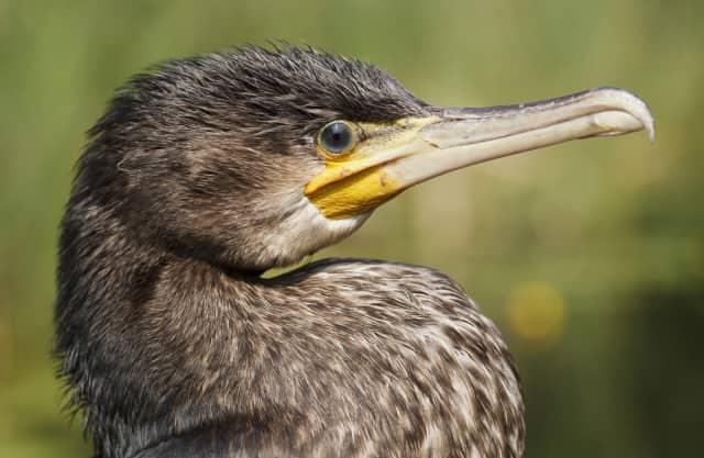 Quackjeswater