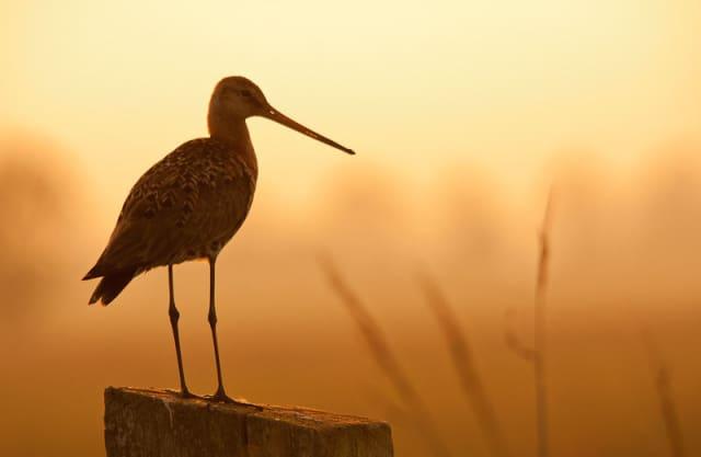 Bekijk de expositie 'Rotterdams Platteland' in Het Natuurhistorisch