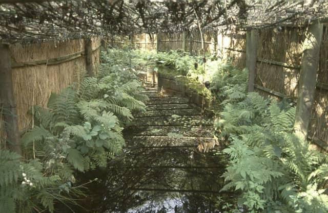 Bos in een laagveenmoeras?
