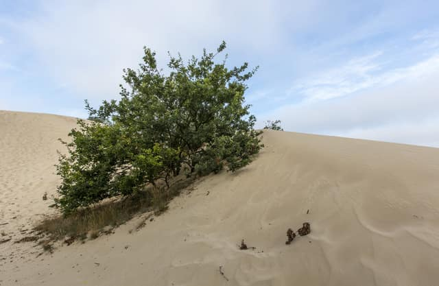 Opgestoven zand