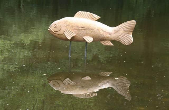 Zoek een vis