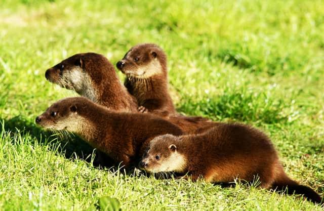 Otterjonkies