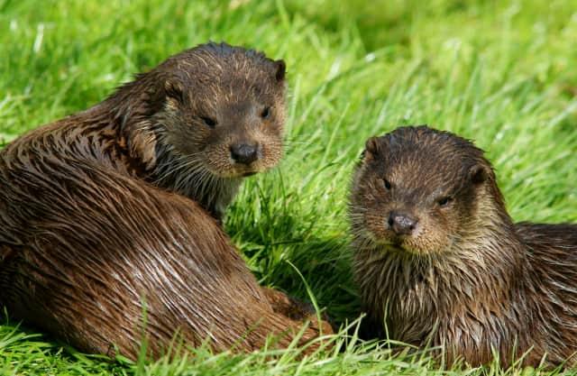 Otterfamilie?