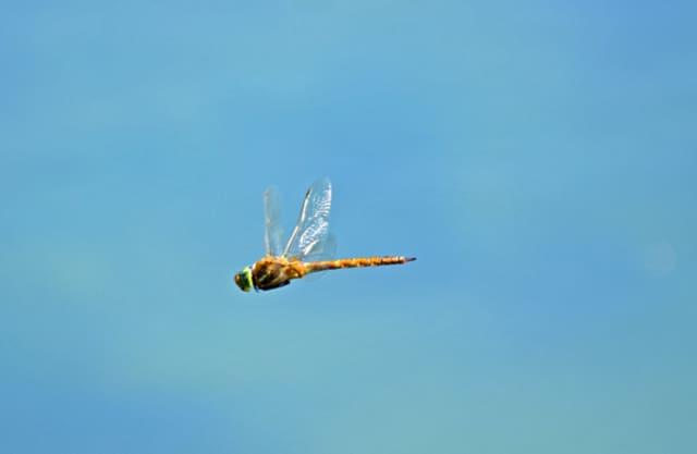 Golven en libellen