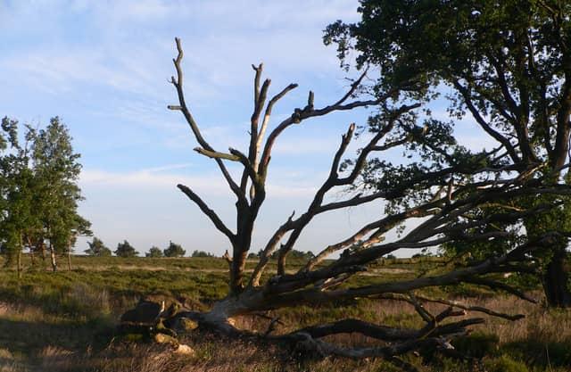 Bos wordt heide