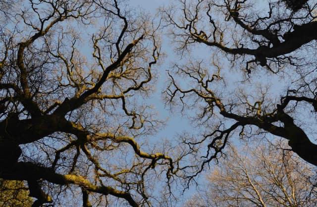 Markante bomen