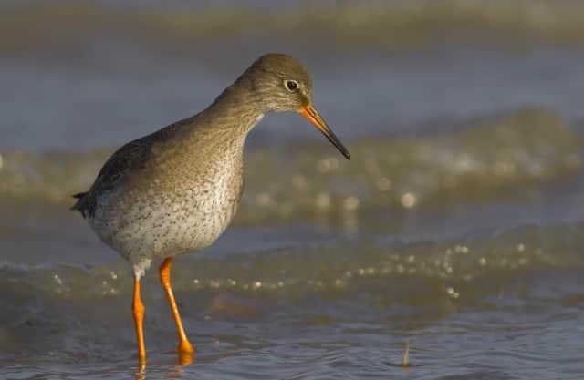 Allerlei vogels op het Quackgors