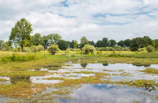 Uitkijkpunt Tondense Heide