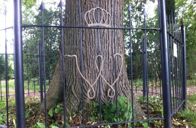 Wilhelminaboom