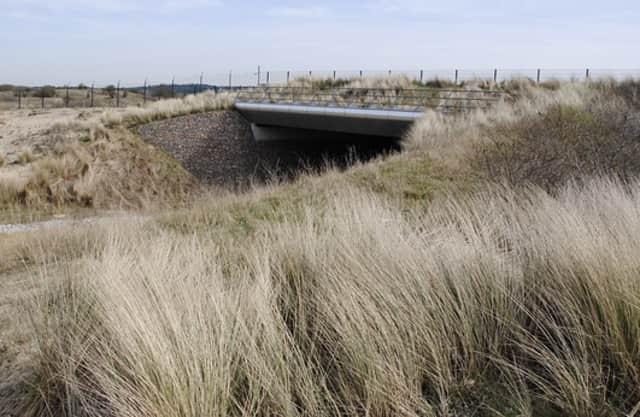 Natuurbrug Zandpoort