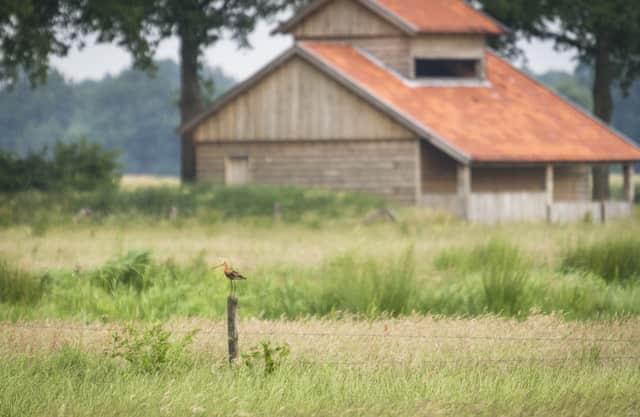 Vogelkijkhut Ottershagenschöpke