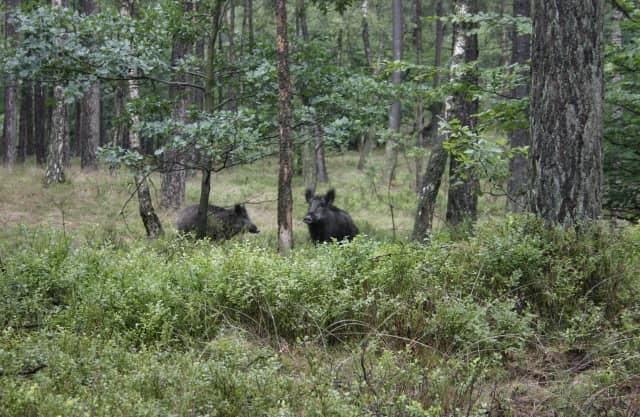 Rijk bos