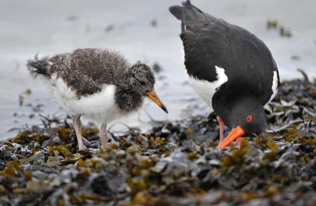 Wegrestaurant voor kustvogels