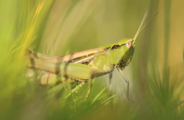 Plekje voor insecten en zoogdieren