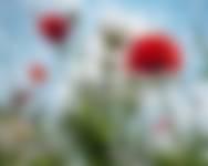 Zaai wilde bloemen