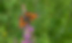Kleine vos landingspagina Thuis voor dieren
