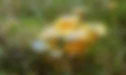 Paddenstoel Elfenwasplaat