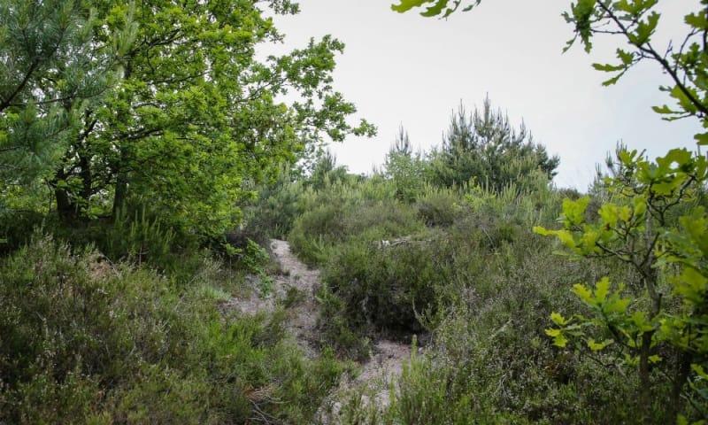 Trailrun Brunssummerheide