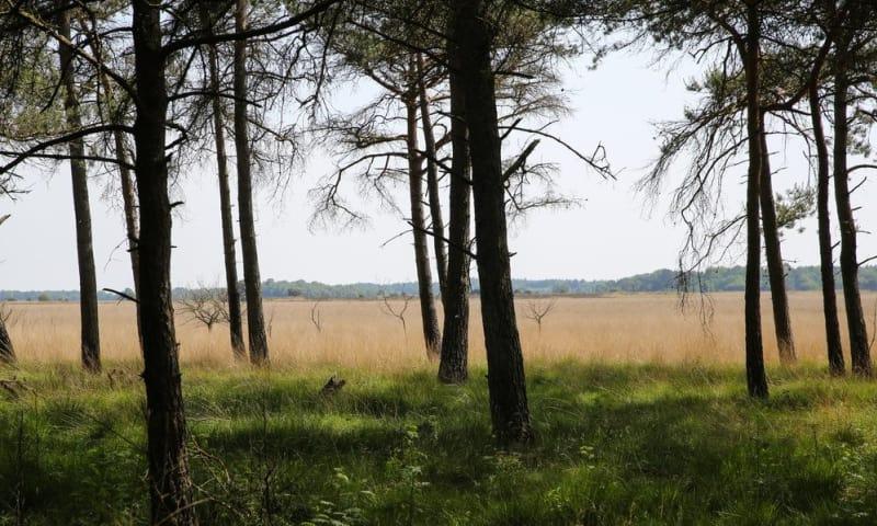 Trailrun Dwingelderveld (Drenthe)