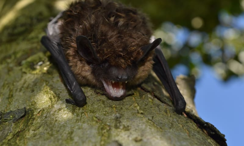 Nacht van de Vleermuis: vleermuizen op Oldenaller
