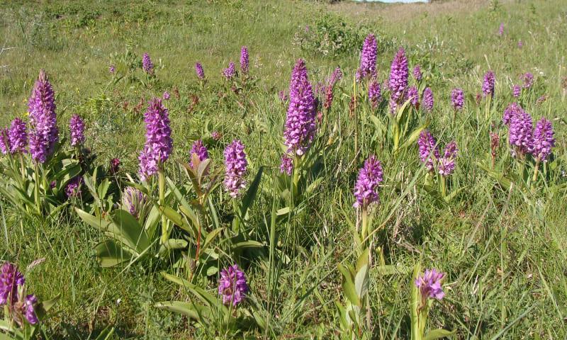 Speurtocht naar orchideeën in Quackjeswater