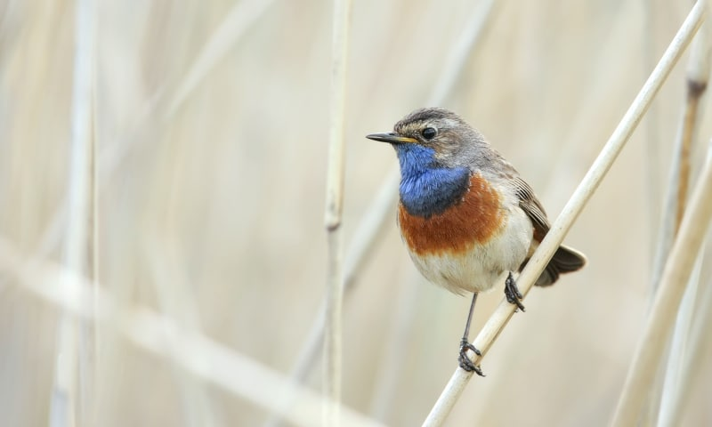Vogels kijken in ontwakend Zwanenwater