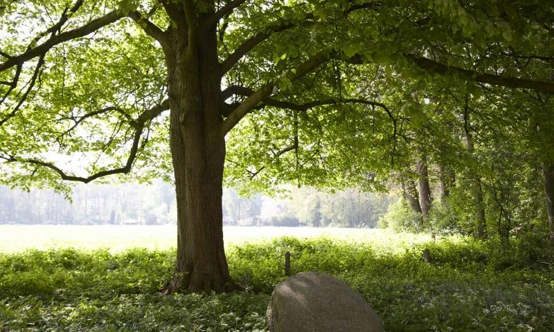 Wandelroute over landgoed de Snippert, tussen Losser en Oldenzaal