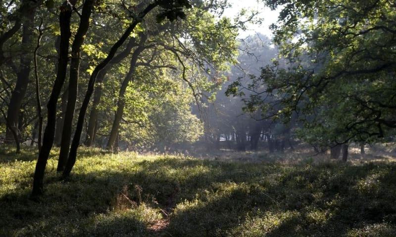 Poëziefietsroute Zuidwest-Veluwe