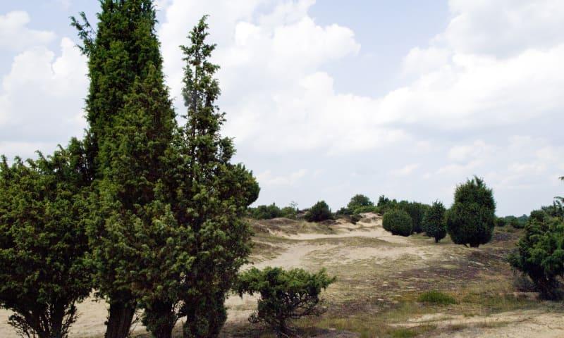 Jeneverbesroute Mantingerveld, vlakbij Hoogeveen