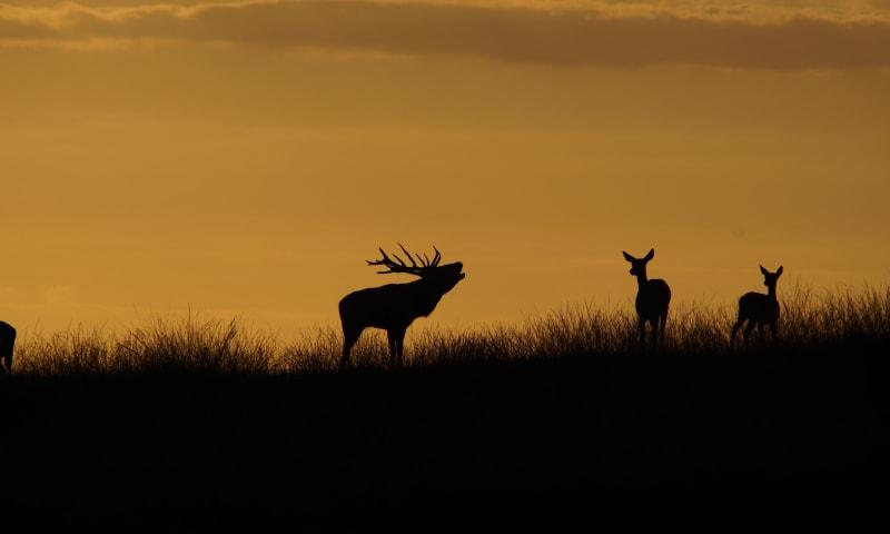 Bronstexcursie Nationaal Park Veluwezoom