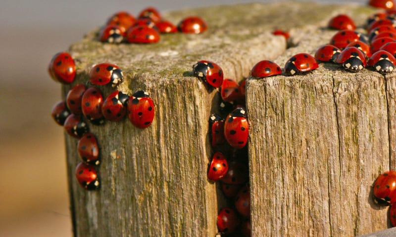 Insecten en andere kriebelbeestjes