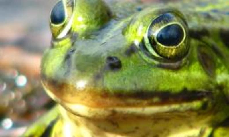 Oerrr: waterdiertjes zoeken op landgoed Velhorst