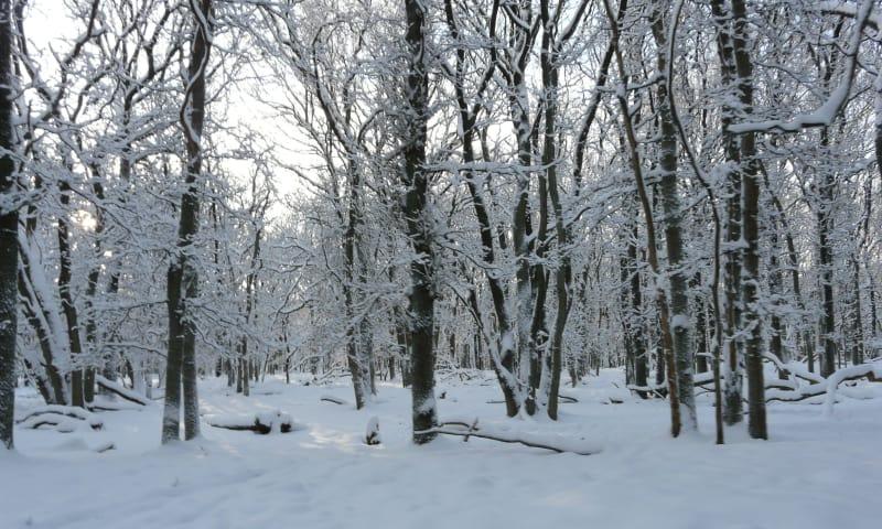 Winterse wandeling met snert Planken Wambuis - Ede