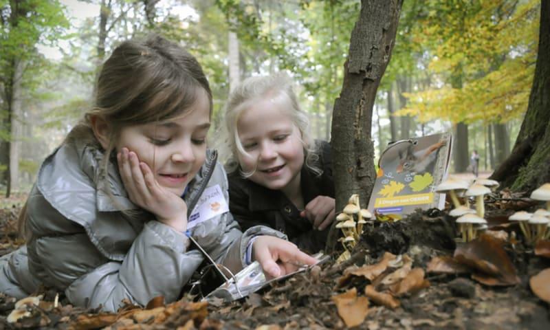 OERRR paddenstoelen - Leuvenumse bossen