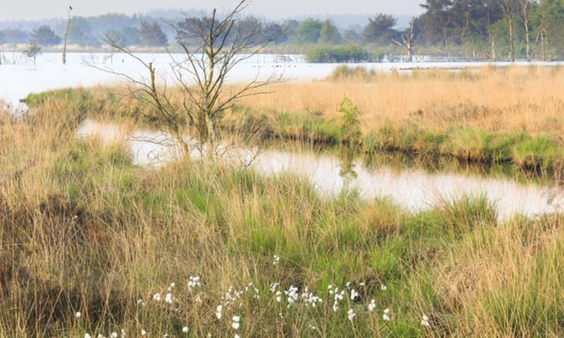 Wandelroute op de grens van Friesland en Drenthe in het Fochteloërveen