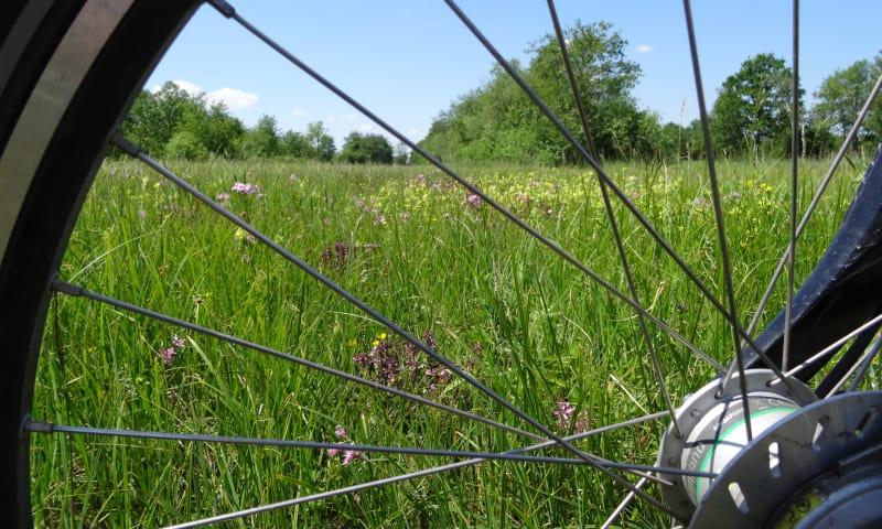 Fietsroute bloemrijke hooilanden in De Wieden