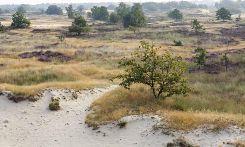 Uitkijkpunt Loonse en Drunense Duinen