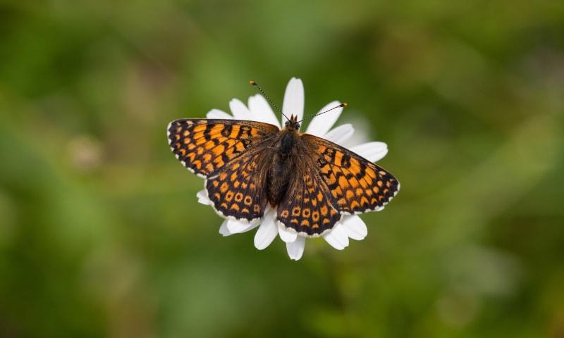 Op zoek naar bloemen en vlinders op de berg