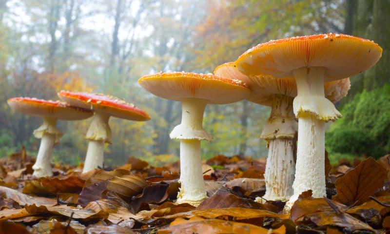 Ontdek de bloemen van de herfst: paddenstoelen