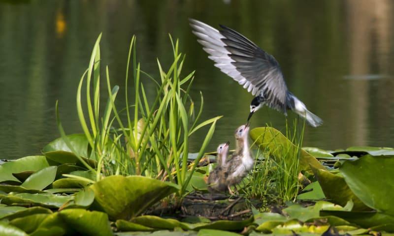 Varen naar vogelparadijs de Pot