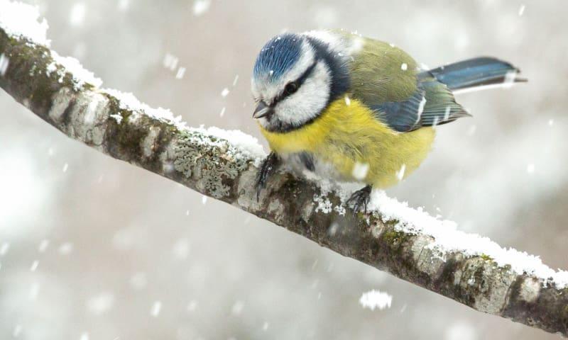 OERRR Winters struinen