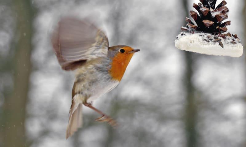 OERRR Vette Vogel Dag op Tiengemeten