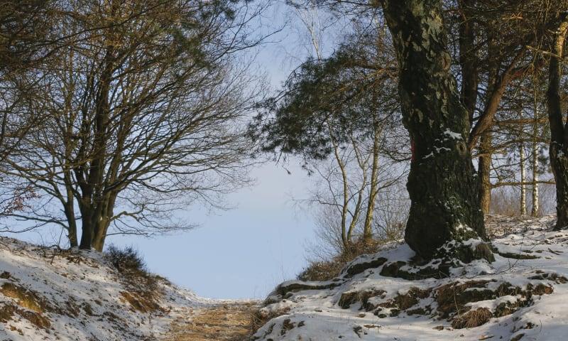 Winter op Veluwezoom