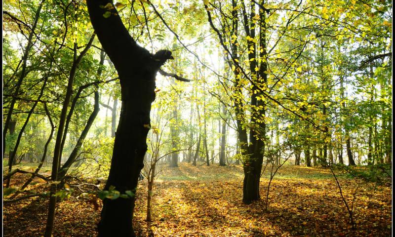 herfst sint-pietersberg